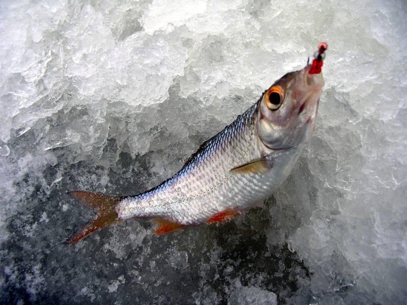 мобильная палатка для зимней рыбалки